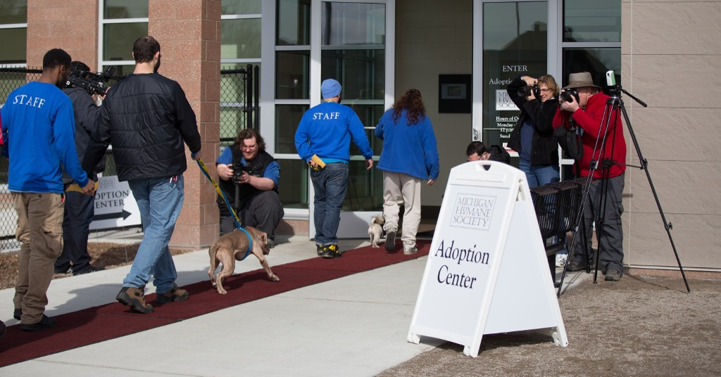 Michigan Humane Society, New Detroit Animal Care Campus